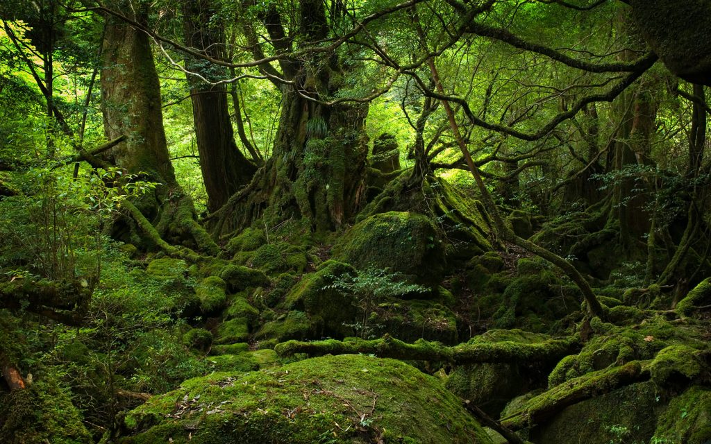 19600_forest_green_forest